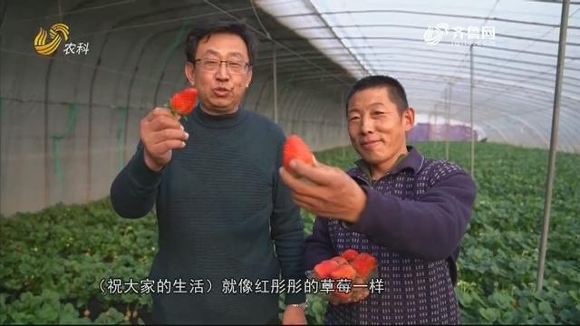 【每周之星】金牌农资经销商联盟:农化服务为先的启元农科