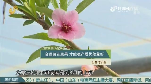 【当前农事·百家讲坛】合理疏花疏果 才能稳产质优效益好