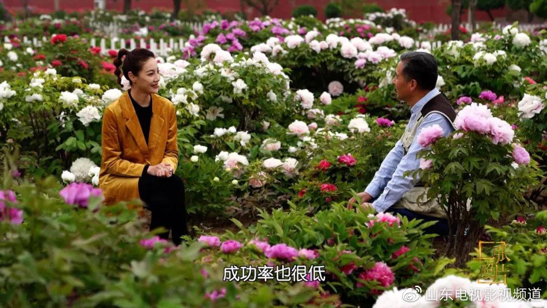 山东影视一张照片20200412播出菏泽牡丹(上)