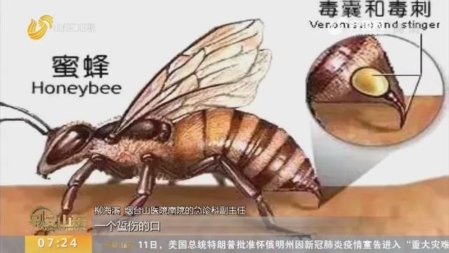 烟台:10岁女孩爬山 被蜂蛰后休克