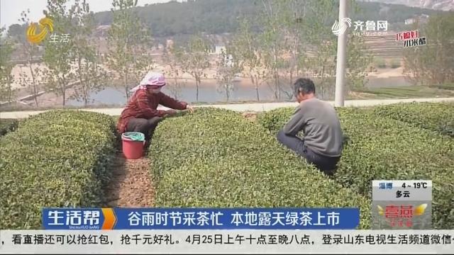 日照:谷雨时节采茶忙 本地露天绿茶上市