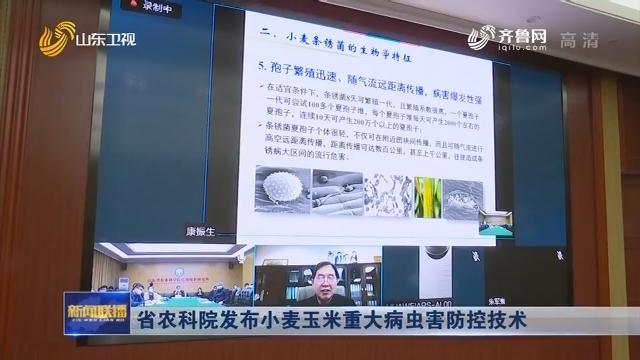 省农科院发布小麦玉米重大病虫害防控技术