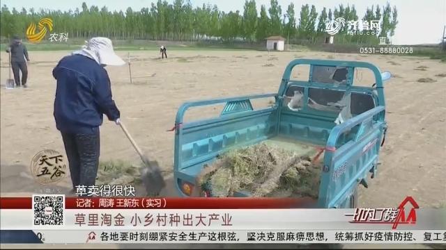 济南:草里淘金 小乡村种出大产业