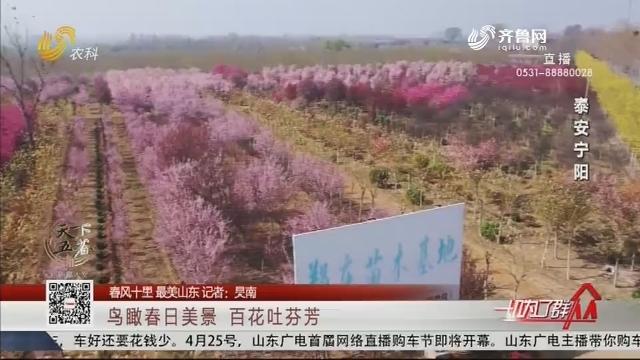 【春风十里 最美山东】鸟瞰春日美景  百花吐芬芳