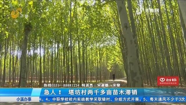 肥城:急人!塔坊村两千多亩苗木滞销