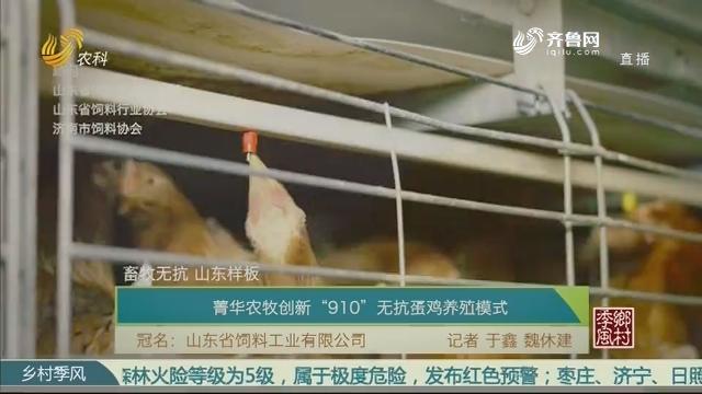 """【畜牧无抗 山东样板】菁华农牧创新""""910""""无抗蛋鸡养殖模式"""