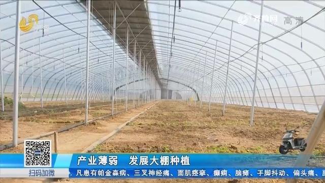 产业薄弱 发展大棚种植