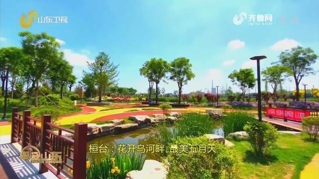 桓台:花开乌河畔 最美五月天
