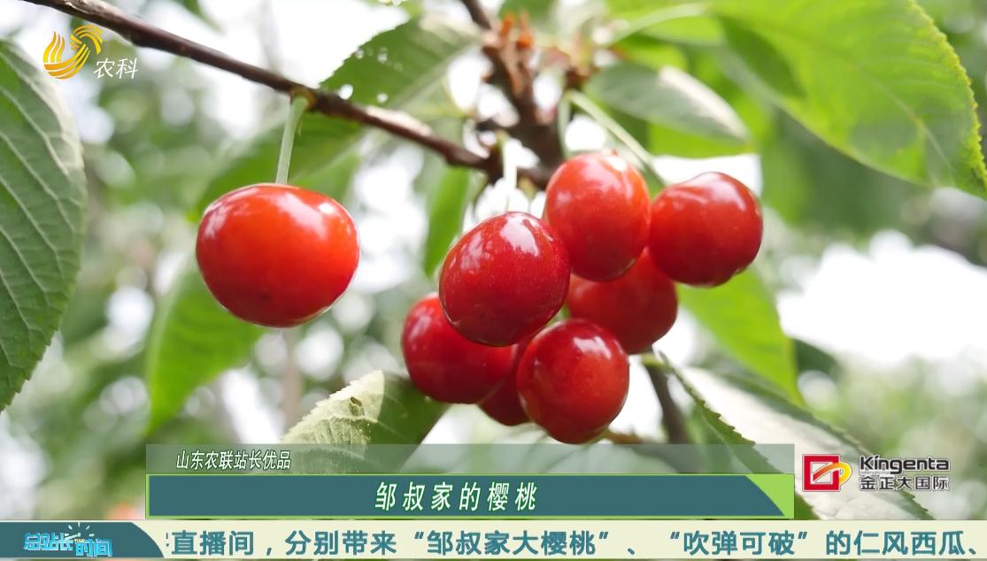 20200510《总站长时间》:山东农联站长优品——大樱桃、仁风西瓜、玫瑰香葡萄