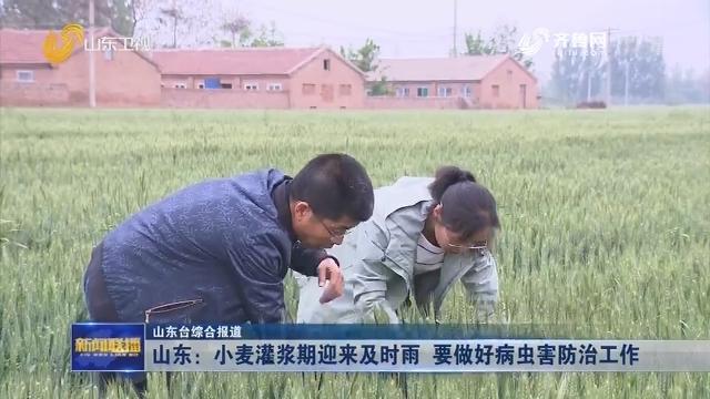 山东:小麦灌浆期迎来及时雨 要做好病虫害防治工作