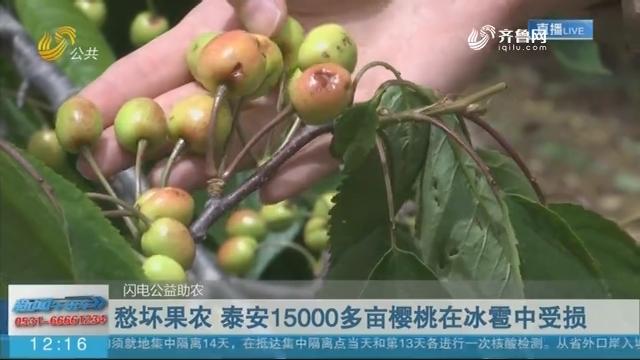 愁坏果农 泰安15000多亩樱桃在冰雹中受损