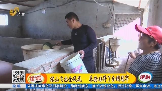 济南:深山飞出金凤凰 养猪娃得了全国冠军