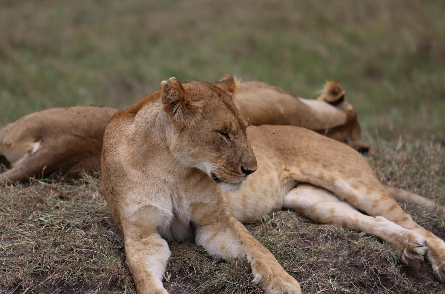 关爱野生动物,守望栖息地
