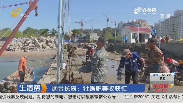 烟台长岛:牡蛎肥美收获忙