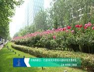 这边景色独好,济南高新区打造花卉景观大道和花漾街区效果显现