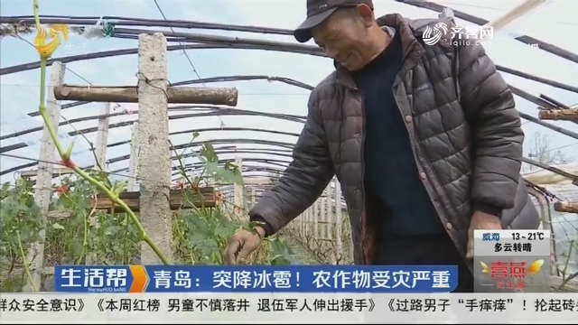 青岛:突降冰雹!农作物受灾严重