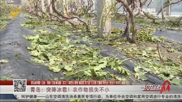 青岛:突降冰雹!农作物损失不小