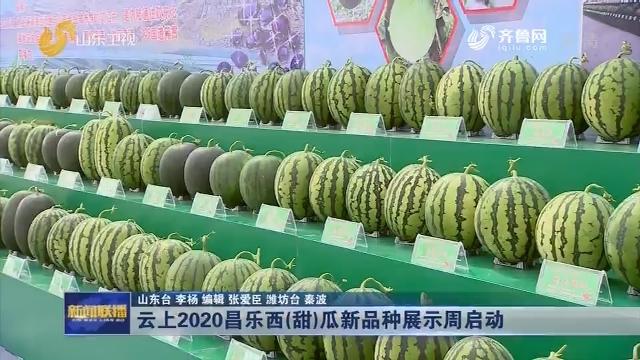 云上2020昌乐西(甜)瓜新品种展示周启动