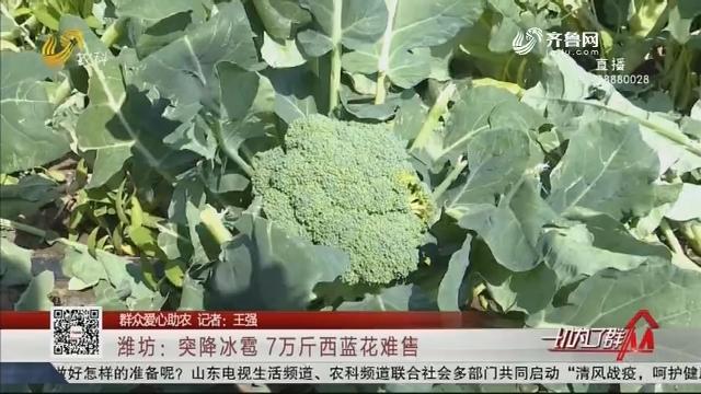 【群众爱心助农】潍坊:突降冰雹 7万斤西蓝花难售