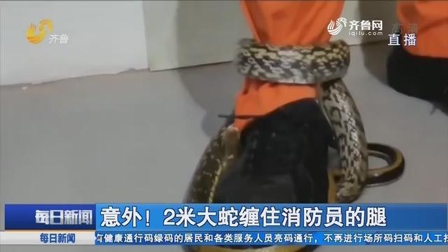 淄博:意外!2米大蛇缠住消防员的腿