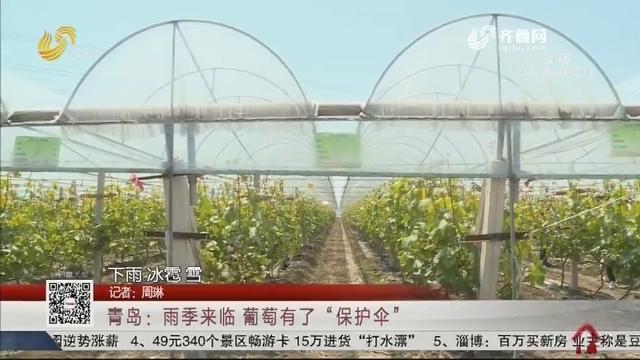 """青岛:雨季来临 葡萄有了""""保护伞"""""""