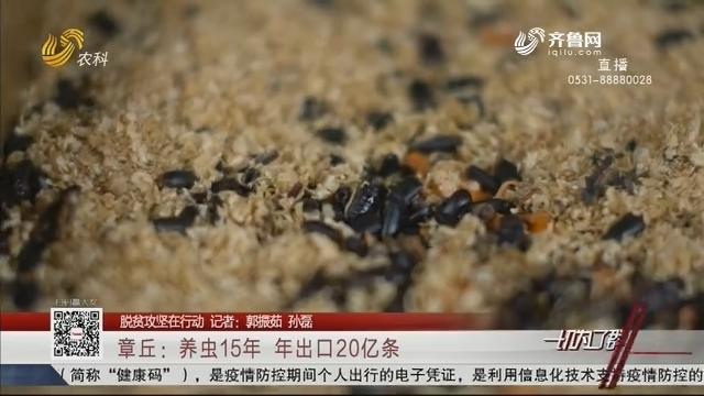 【脱贫攻坚在行动】章丘:养虫15年 年出口20亿条