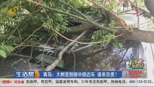 【有事您说话】青岛:大树歪倒砸中路边车 谁来负责?