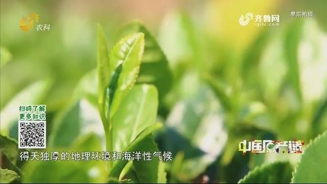 20200522《中国原产递》:日照绿茶