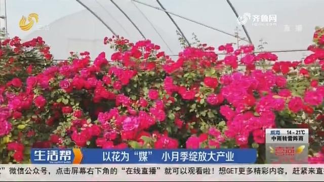 """烟台:以花为""""媒"""" 小月季绽放大产业"""