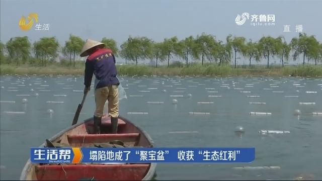 """济宁:塌陷地成了""""聚宝盆"""" 收获""""生态红利"""""""