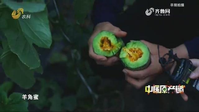 20200525《中国原产递》:羊角蜜
