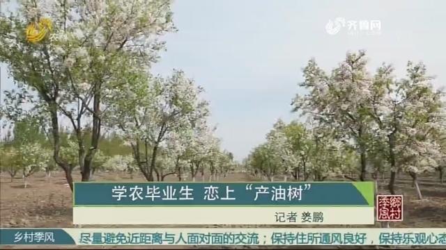 """学农毕业生 恋上""""产油树"""""""