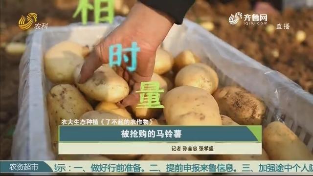 【农大生态种植《了不起的农作物》】被抢购的马铃薯