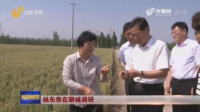 杨东奇在聊城调研