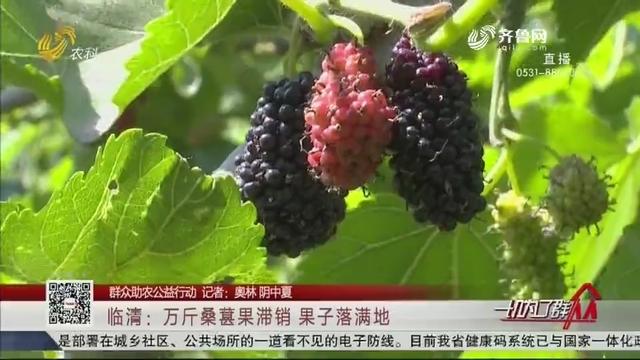 【群众助农公益行动】临清:万斤桑葚果滞销 果子落满地
