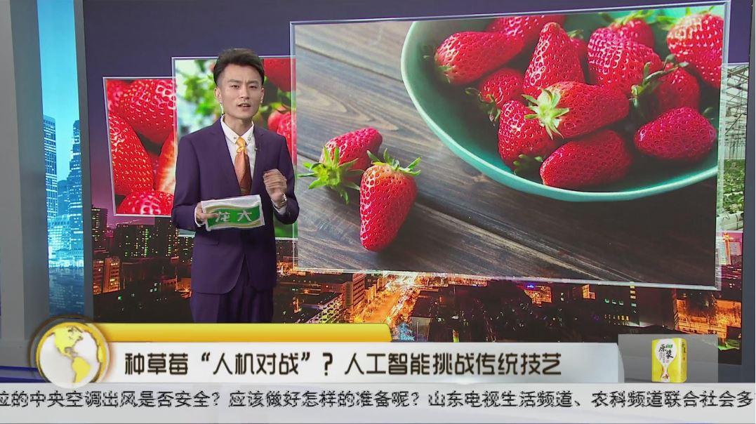 """种草莓""""人机对战"""" ?人工智能挑战传统技艺"""