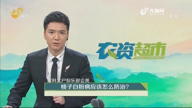 【农科大户俱乐部会员】桃子白粉病应该怎么防治?