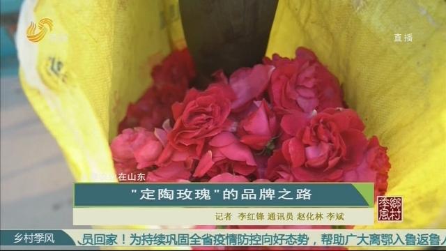 """【品牌农业在山东】""""定陶玫瑰""""的品牌之路"""