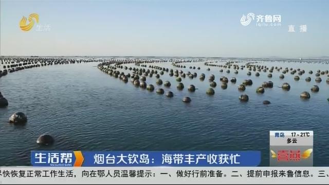 烟台大钦岛:海带丰产收获忙