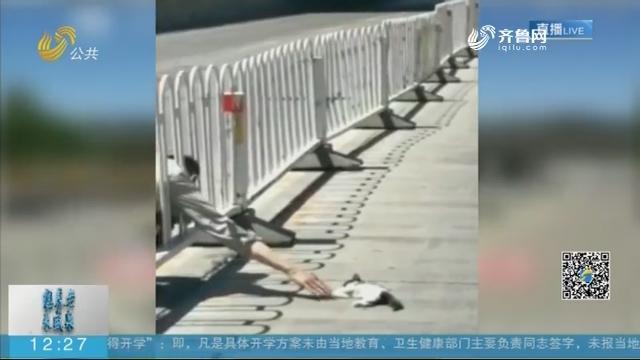 【闪电新闻客户端】受伤小猫被困车流 热心男子尝试四次成功救出