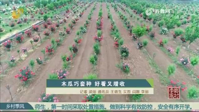 木瓜巧套种 好看又增收