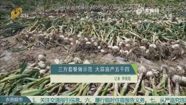 【三方赢高产 冠军示范田】三方套餐做示范 大蒜亩产五千四