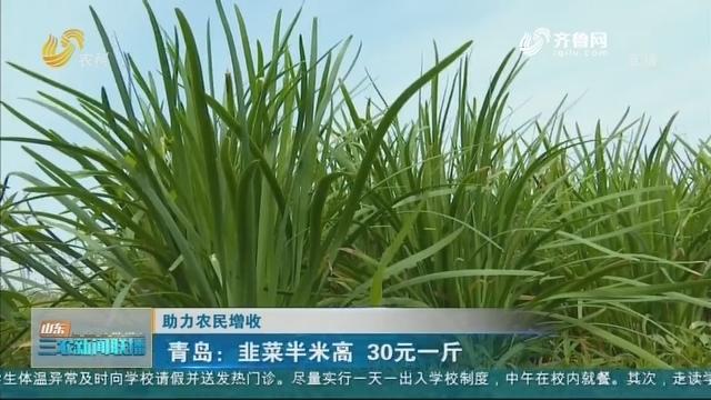 【助力农民增收】青岛:韭菜半米高 30元一斤