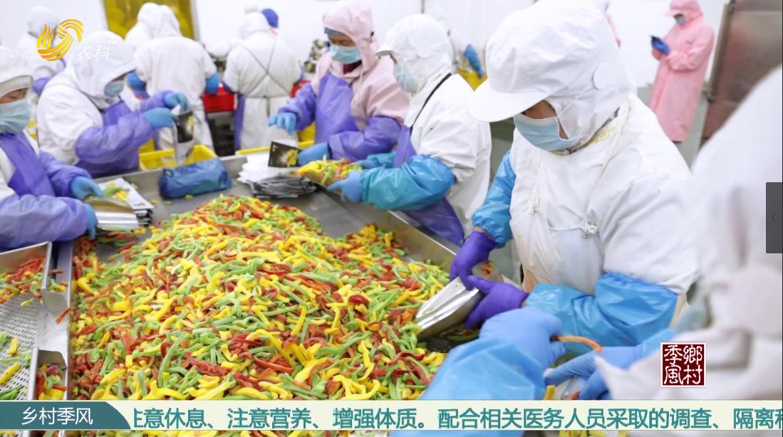 莒县城阳:速冻蔬菜撬动过亿产业