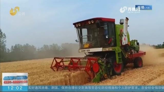 """临沭:夏收""""第一镰"""" 拉开小麦收割序幕"""