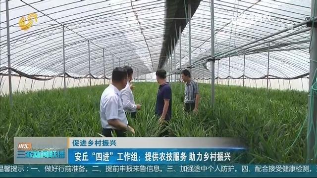 """【促进乡村振兴】安丘""""四进""""工作组:提供农技服务 助力乡村振兴"""