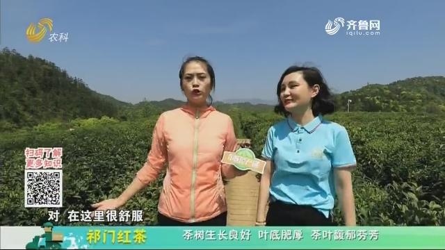 20200530《中国原产递》:祁门红茶