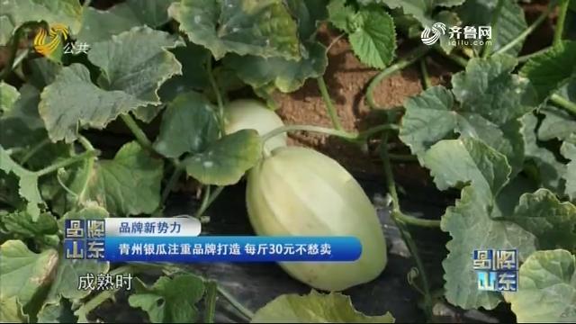 【品牌新势力】青州银瓜注重品牌打造 每斤30元不愁卖