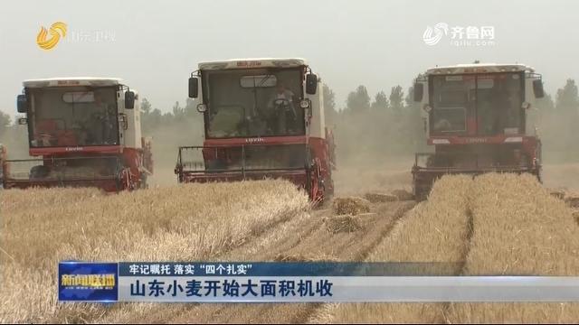 """【牢记嘱托 落实""""四个扎实""""】山东小麦开始大面积机收"""