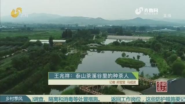王兆祥:泰山茶溪谷里的种茶人
